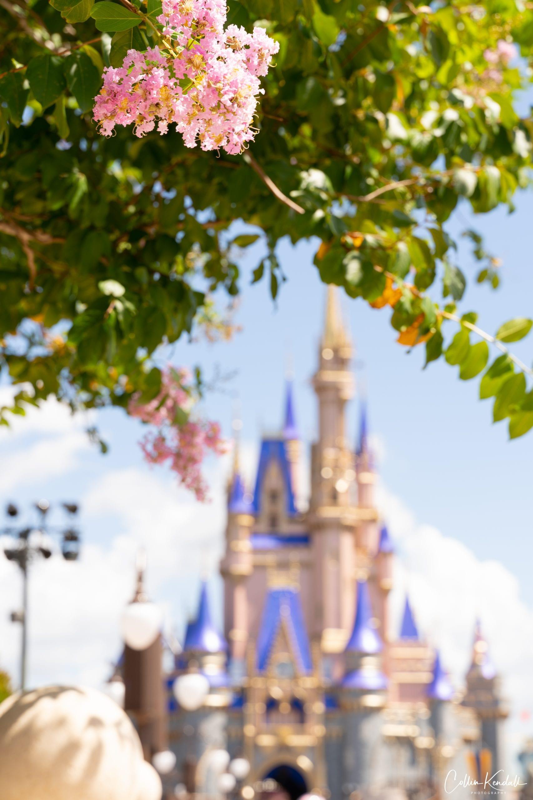 Disney World's new castle design is unveiled